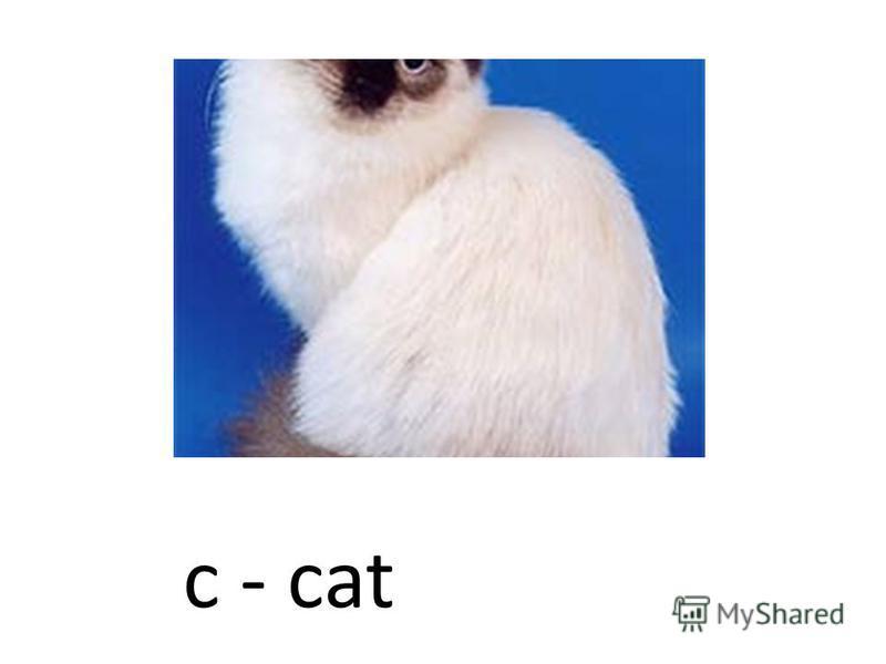 c - cat