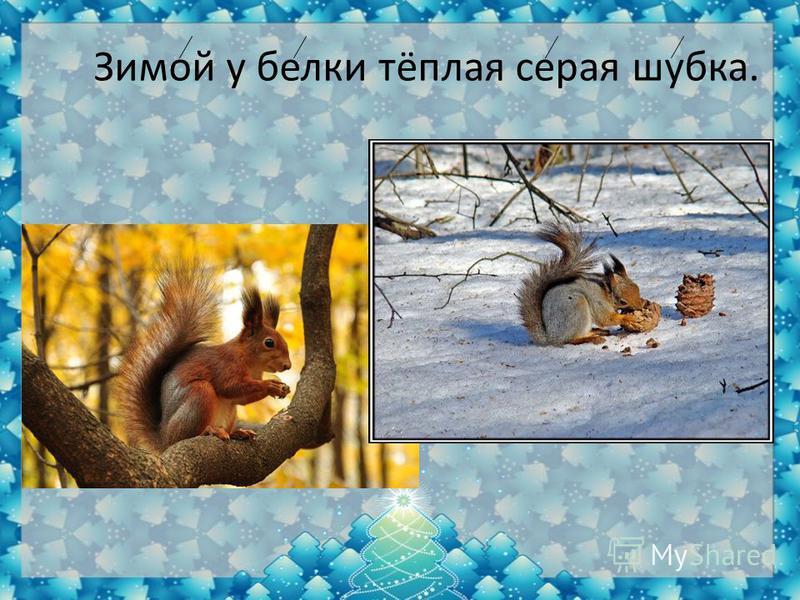 Зимой у белки тёплая серая шубка.