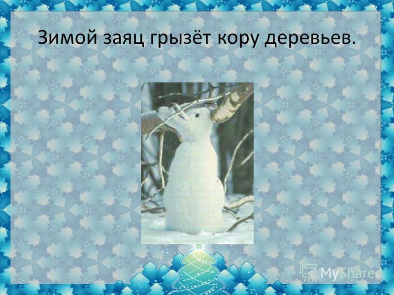 Зимой заяц грызёт кору деревьев.