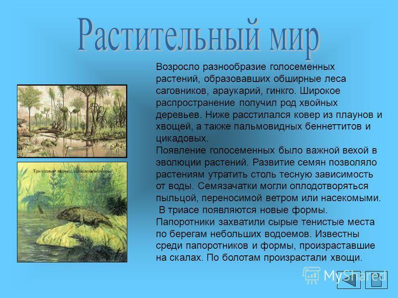 Возросло разнообразие голосеменных растений, образовавших обширные леса саговников, араукарий, гинкго. Широкое распространение получил род хвойных деревьев. Ниже расстилался ковер из плаунов и хвощей, а также пальмовидных беннеттитов и цикадовых. Поя