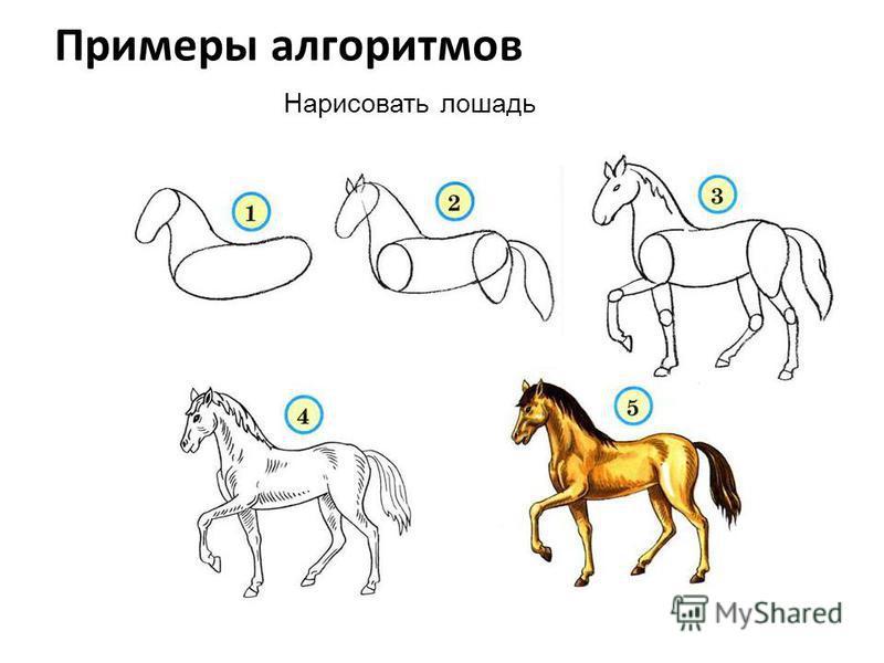 Примеры алгоритмов Нарисовать лошадь