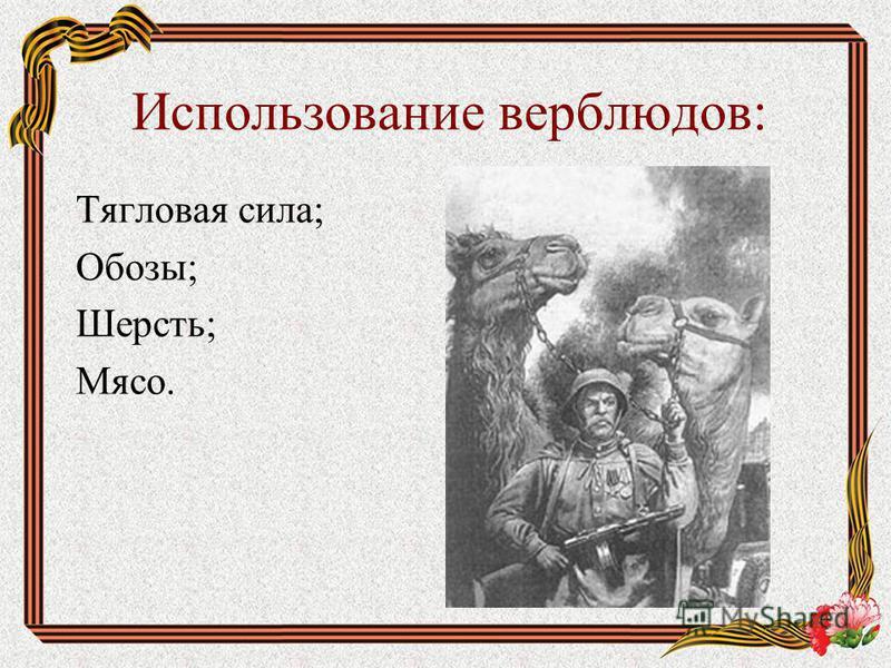 Использование верблюдов: Тягловая сила; Обозы; Шерсть; Мясо.