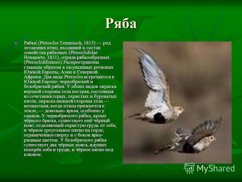 Ряба Рябки́ (Pterocles Temminck, 1815) род летающих птиц, входящий в состав семейства рябковых (Pteroclididae Bonaparte, 1831), отряда рябкообразных (Pteroclidiformes). Распространены главным образом в засушливых регионах Южной Европы, Азии и Северно