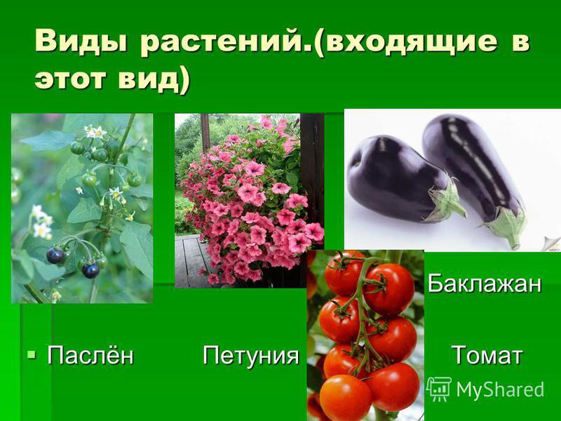 Виды растений.(входящие в этот вид) Баклажан Баклажан Паслён Петуния Томат Паслён Петуния Томат