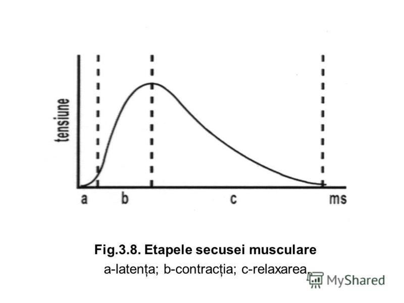 Fig.3.8. Etapele secusei musculare a-latenţa; b-contracţia; c-relaxarea.