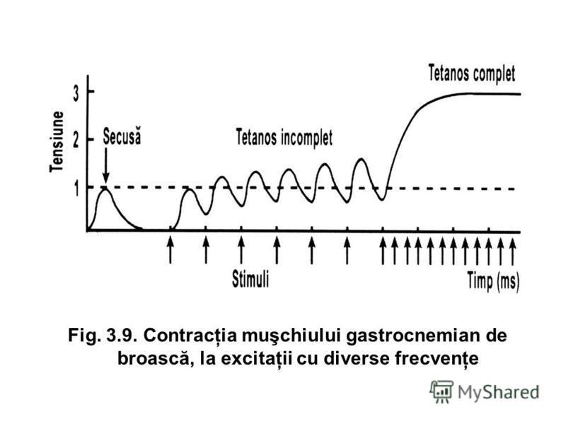 Fig. 3.9. Contracţia muşchiului gastrocnemian de broască, la excitaţii cu diverse frecvenţe