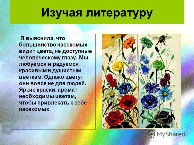 Изучая литературу Я выяснила, что большинство насекомых видит цвета, не доступные человеческому глазу. Мы любуемся и радуемся красивым и душистым цветкам. Однако цветут они вовсе не для людей. Яркие краски, аромат необходимы цветам, чтобы привлекать