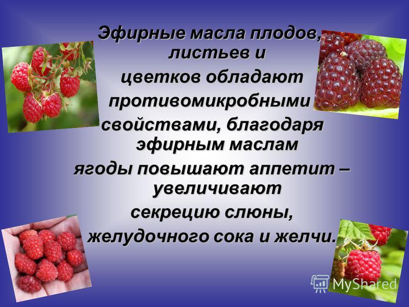 Эфирные масла плодов, листьев и цветков обладают цветков обладают противомикробным и свойствами, благодаря эфирным маслам свойствами, благодаря эфирным маслам ягоды повышают аппетит – увеличивают ягоды повышают аппетит – увеличивают секрецию слюны, с