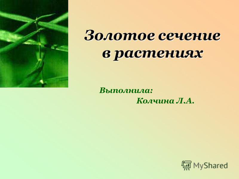 Золотое сечение в растениях Выполнила: Колчина Л.А.