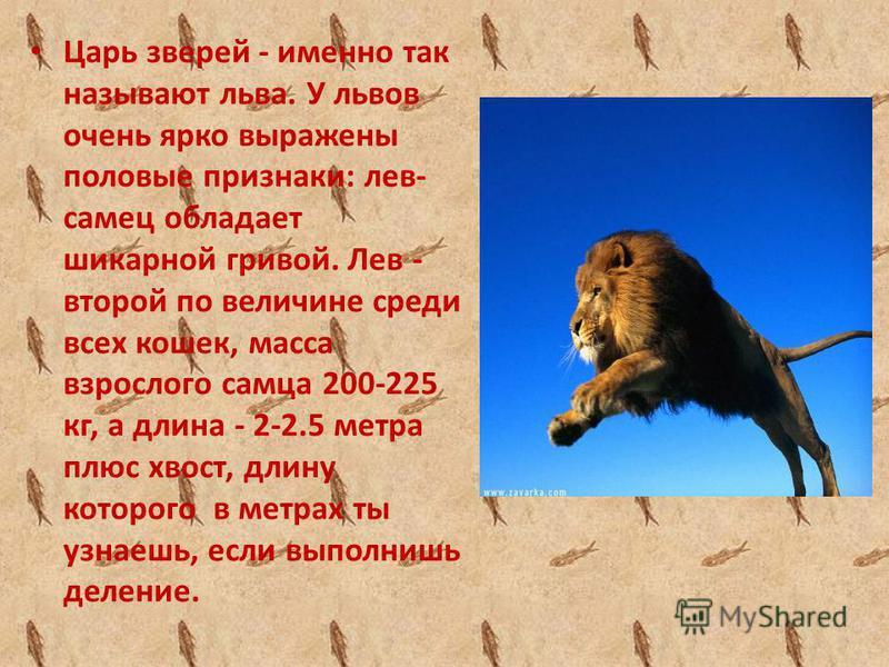 У этого зверя есть прозвище в лесу. Он большой и сильный и он не любит чужаков. лев