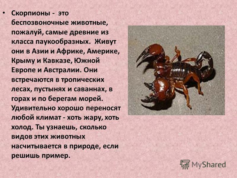Это маленькое животное. Он живет в жарких странах. скорпион