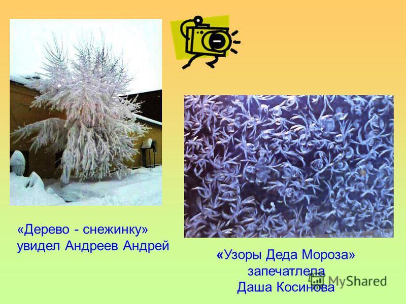 «Дерево - снежинку» увидел Андреев Андрей «Узоры Деда Мороза» запечатлела Даша Косинова
