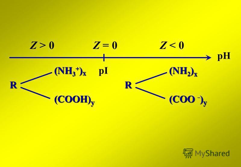 pH Z = 0 (NH 3 + ) x R (COOH) y Z > 0Z < 0 (NH 2 ) x R (COO – ) y pI