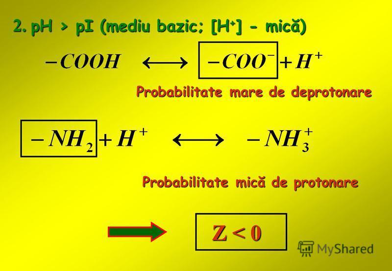 2. pH > pI (mediu bazic; [H + ] - mică) Probabilitate mare de deprotonare Probabilitate mică de protonare Z < 0