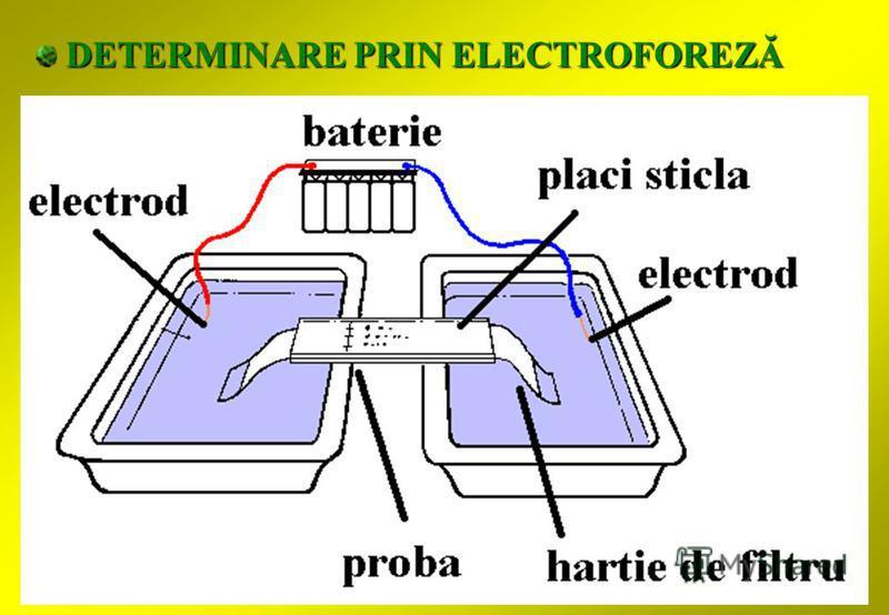 DETERMINARE PRIN ELECTROFOREZĂ