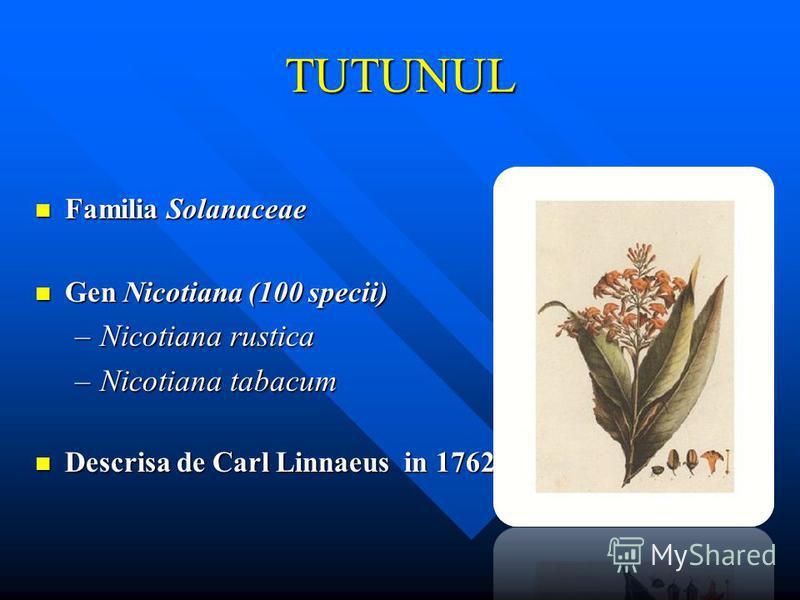 TUTUNUL Familia Solanaceae Familia Solanaceae Gen Nicotiana (100 specii) Gen Nicotiana (100 specii) –Nicotiana rustica –Nicotiana tabacum Descrisa de Carl Linnaeus in 1762 Descrisa de Carl Linnaeus in 1762