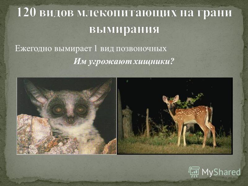 Ежегодно вымирает 1 вид позвоночных Им угрожают хищники?