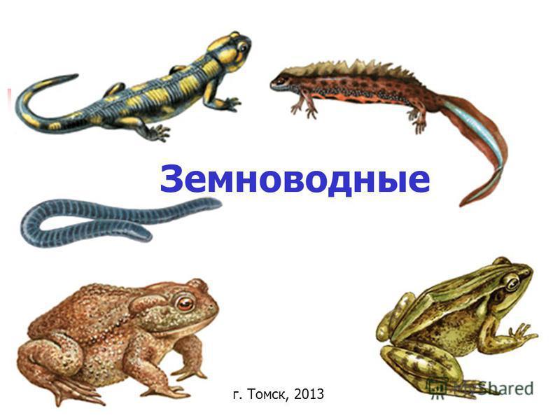 Земноводные г. Томск, 2013