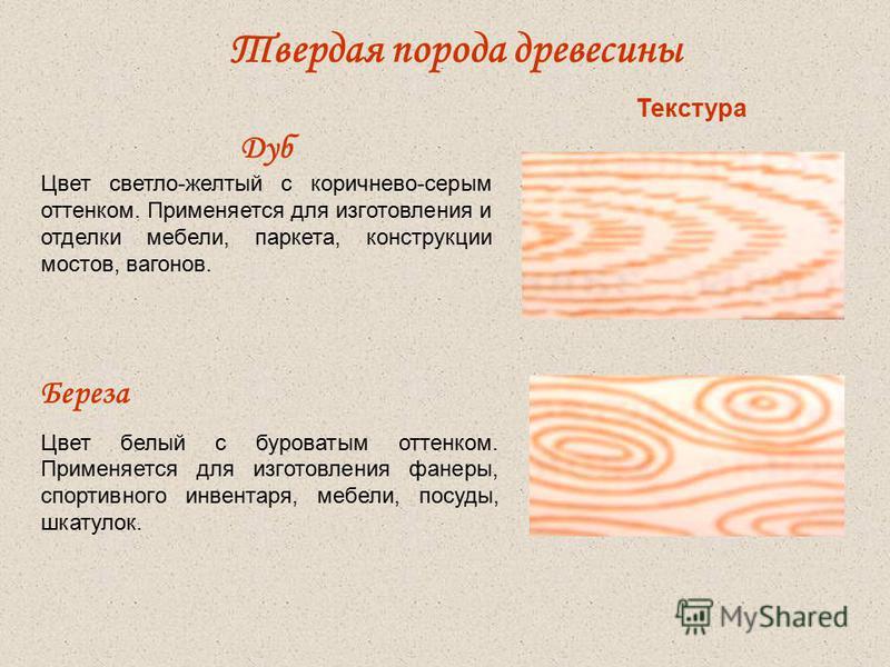 Твердая порода древесины Дуб Цвет светло-желтый с коричнево-серым оттенком. Применяется для изготовления и отделки мебели, паркета, конструкции мостов, вагонов. Береза Цвет белый с буроватым оттенком. Применяется для изготовления фанеры, спортивного