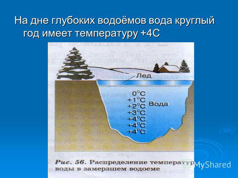 На дне глубоких водоёмов вода круглый год имеет температуру +4С