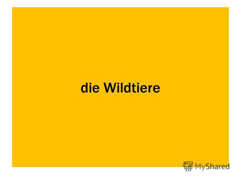 die Wildtiere