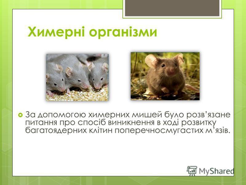 Химерні організми За допомогою химерних мишей було розвязане питання про спосіб виникнення в ході розвитку багатоядерних клітин поперечносмугастих мязів.