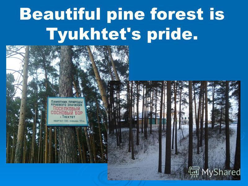 Beautiful pine forest is Tyukhtet's pride.