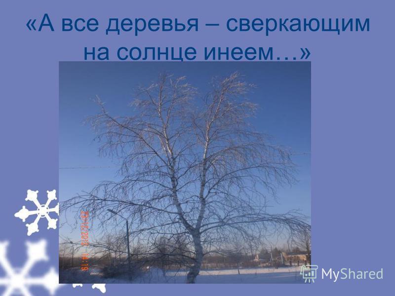 «А все деревья – сверкающим на солнце инеем…»