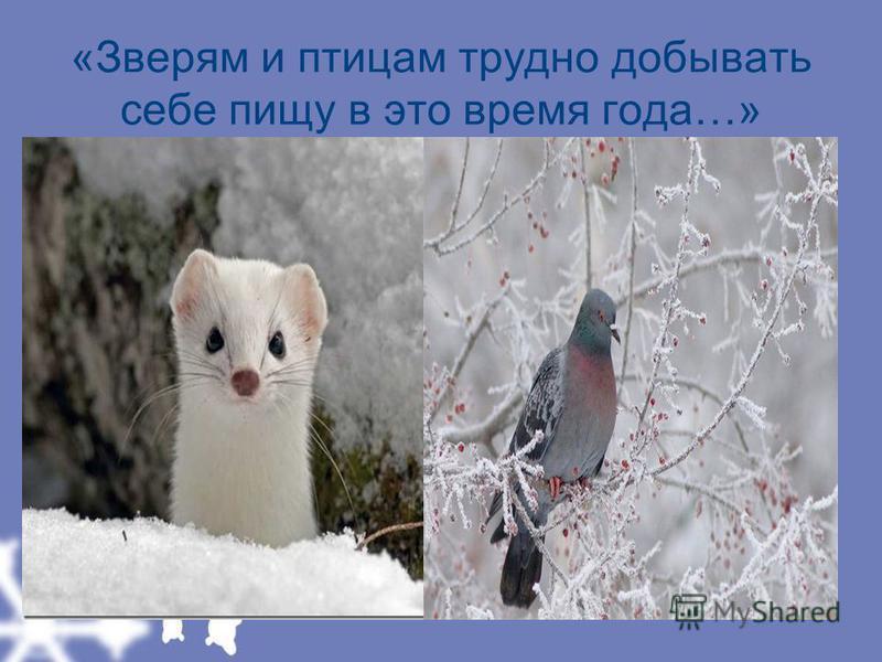 «Зверям и птицам трудно добывать себе пищу в это время года…»