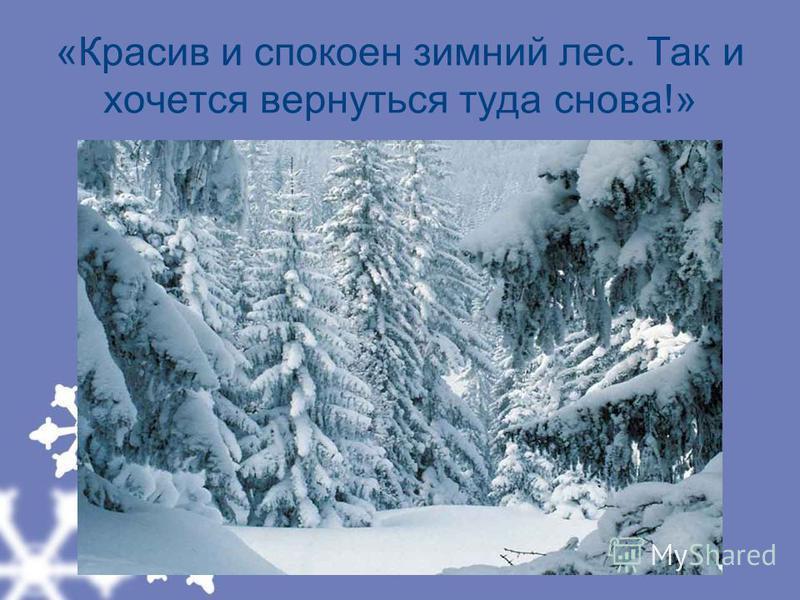 «Красив и спокоен зимний лес. Так и хочется вернуться туда снова!»