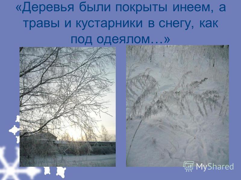 «Деревья были покрыты инеем, а травы и кустарники в снегу, как под одеялом…»