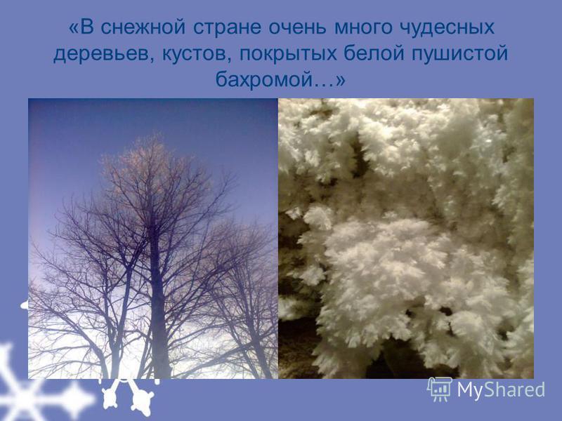 «В снежной стране очень много чудесных деревьев, кустов, покрытых белой пушистой бахромой…»