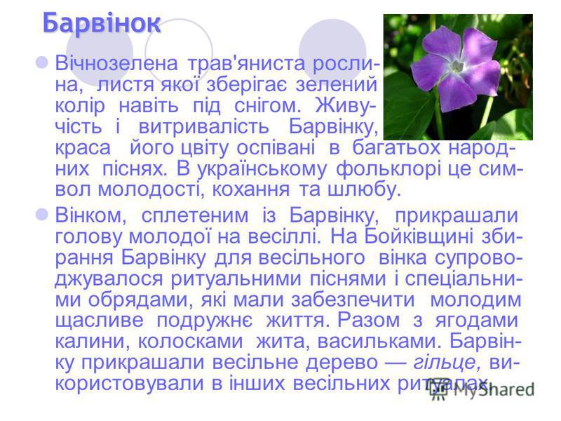 Барвінок Вічнозелена трав'яниста росли- на, листя якої зберігає зелений колір навіть під снігом. Живу- чість і витривалість Барвінку, краса його цвіту оспівані в багатьох народ- них піснях. В українському фольклорі це сим- вол молодості, кохання та ш