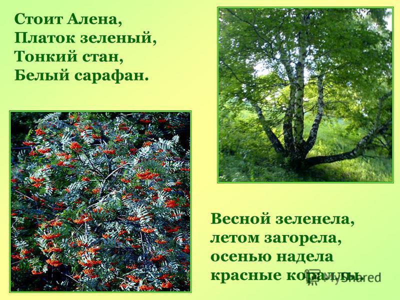 Стоит Алена, Платок зеленый, Тонкий стан, Белый сарафан. Весной зеленела, летом загорела, осенью надела красные кораллы.