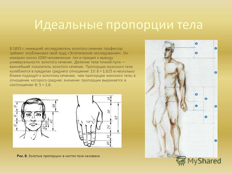 Идеальные пропорции тела В 1855 г. немецкий исследователь золотого сечения профессор Цейзинг опубликовал свой труд «Эстетические исследования». Он измерил около 2000 человеческих тел и пришел к выводу универсальности золотого сечения. Деление тела то