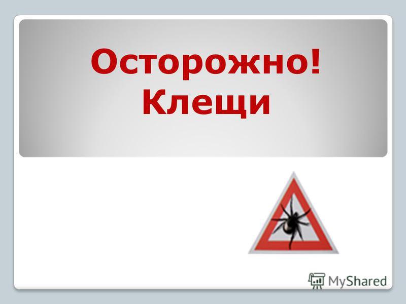 Осторожно! Клещи