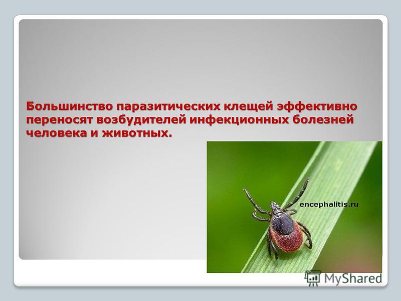Большинство паразитических клещей эффективно переносят возбудителей инфекционных болезней человека и животных. Большинство паразитических клещей эффективно переносят возбудителей инфекционных болезней человека и животных.