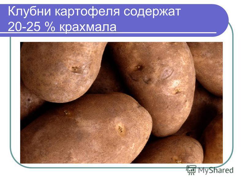 Клубни картофеля содержат 20-25 % крахмала
