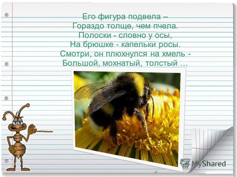 Его фигура подвела – Гораздо толще, чем пчела. Полоски - словно у осы, На брюшке - капельки росы. Смотри, он плюхнулся на хмель - Большой, мохнатый, толстый …