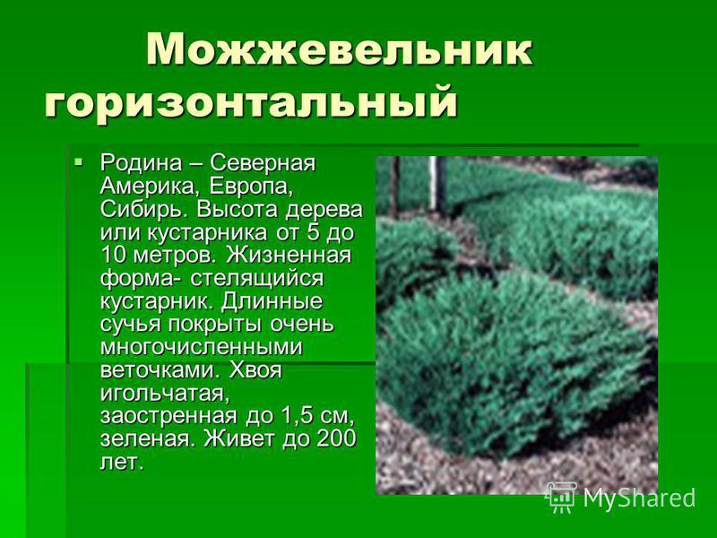 Можжевельник горизонтальный Можжевельник горизонтальный Родина – Северная Америка, Европа, Сибирь. Высота дерева или кустарника от 5 до 10 метров. Жизненная форма- стелющийся кустарник. Длинные сучья покрыты очень многочисленными веточками. Хвоя игол