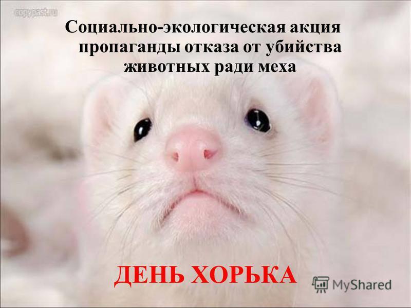 ДЕНЬ ХОРЬКА Социально-экологическая акция пропаганды отказа от убийства животных ради меха
