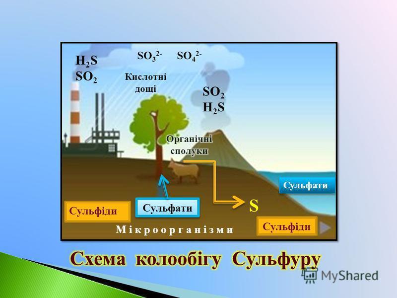 Сульфіди Сульфати Сульфіди SO 2 H 2 S SO 2 М і к р о о р г а н і з м и Кислотні дощі SO 3 2- SO 4 2- S