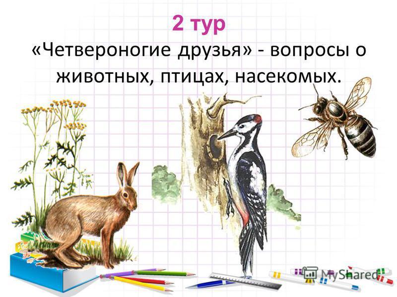 2 тур «Четвероногие друзья» - вопросы о животных, птицах, насекомых.