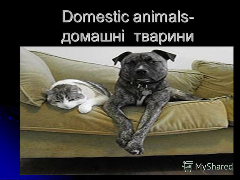 Domestic animals- домашні тварини