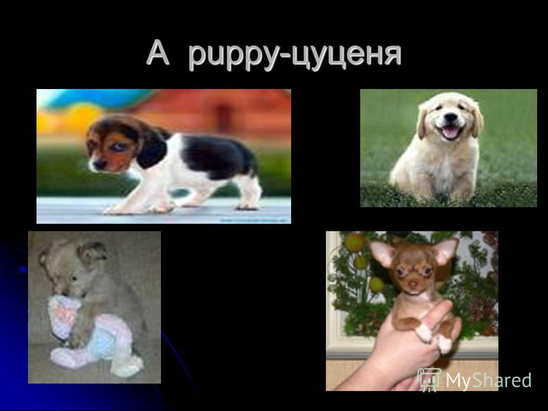 A puppy-цуценя