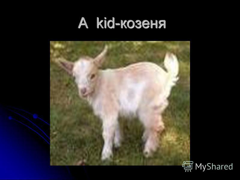 A kid-козеня A kid-козеня