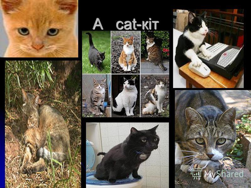A cat-кіт