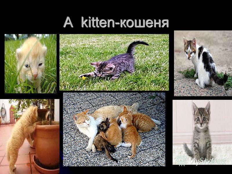 A kitten-кошеня