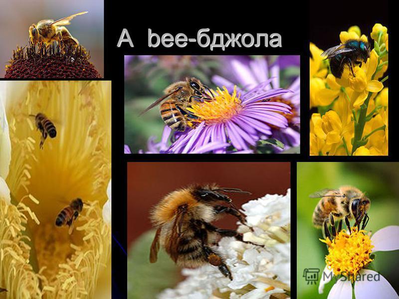 A bee-бджола