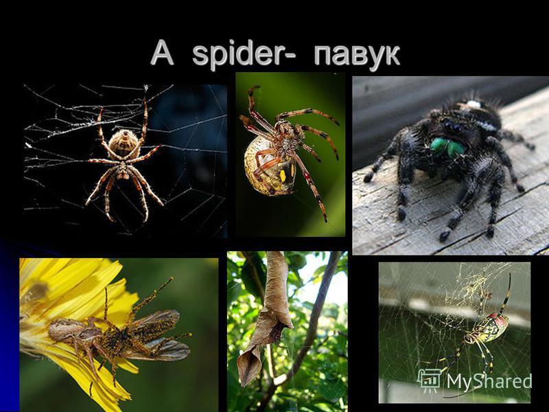 A spider- павук